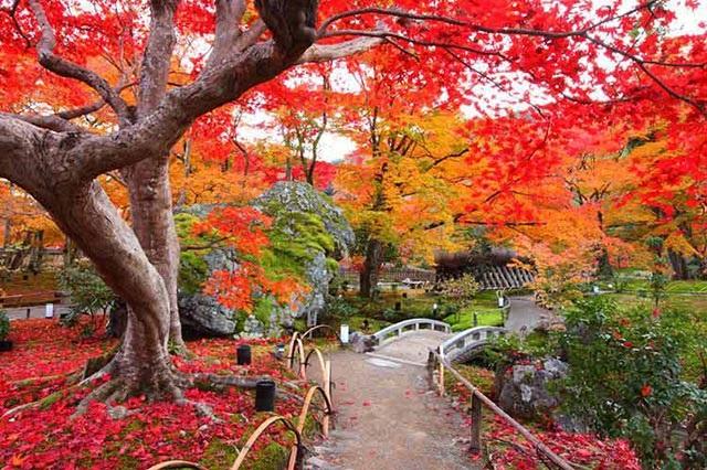 Vẻ đẹp của Tokyo mùa lá đỏ