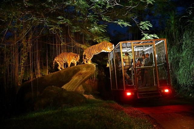 Du khách sẽ được hòa vào cuộc sống của động vạt khi đến Night Safari