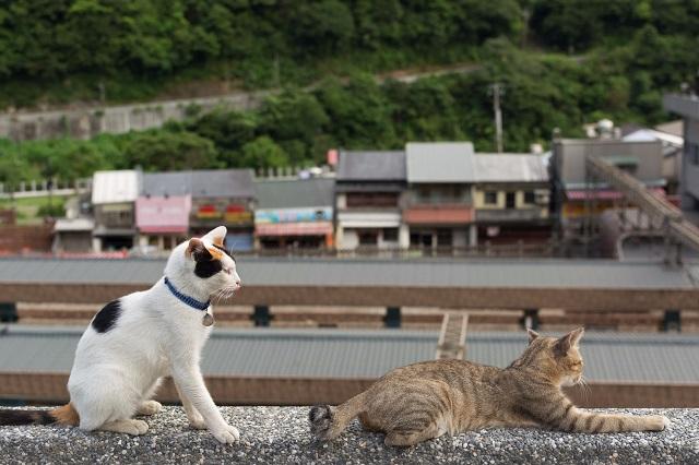 Đi đâu trong làng bạn cũng sẽ bắt gặp những chú mèo đáng yêu