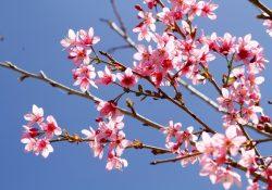 Chìm đắm trong ngàn sắc hoa vào ngày lễ Tết tại Đà Lạt