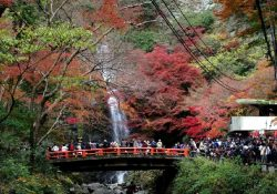 Những địa điểm tham quan lý tưởng khi du lịch Osaka Nhật Bản