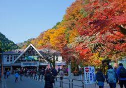 4 điểm ngắm lá mùa thu tuyệt nhất Tokyo