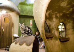 4 quán cà phê lý tưởng tại Tokyo dành cho những ai yêu thích động vật