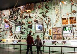 Bảo tàng Lịch sử Tự nhiên Hoa Kỳ – điểm đến cho gia đình ở New York