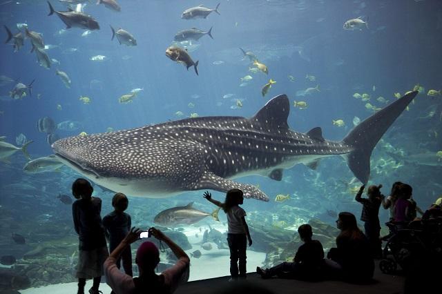 Bạn sẽ có cơ hội khám phá thế giới dưới lòng đại dương khi tham quan thủy cung Dallas World