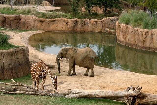 Nơi sinh sống của các loài động có thiết kế gần giống nhất với môi trường hoang dã