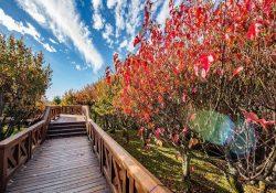 Những địa điểm ngắm sắc lá phong mùa thu tuyệt đẹp ở Đài Loan