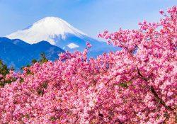 Chiêm ngưỡng 4 sắc thái cực phẩm của núi Phú Sỹ ở Nhật Bản