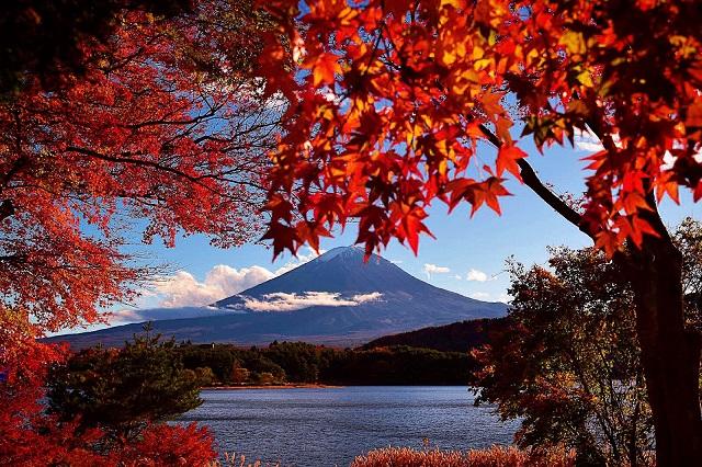 Mùa thu nhiều du khách đến núi Phú Sỹ để ngắm lá phong đỏ