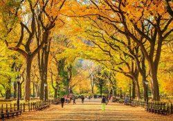 Những trải nghiệm khó bỏ qua khi vi vu đến New York